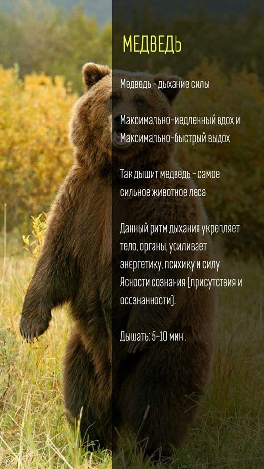 Дыхание и рукопашный бой. Медведь